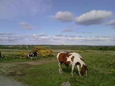 Horses on Welshmoor