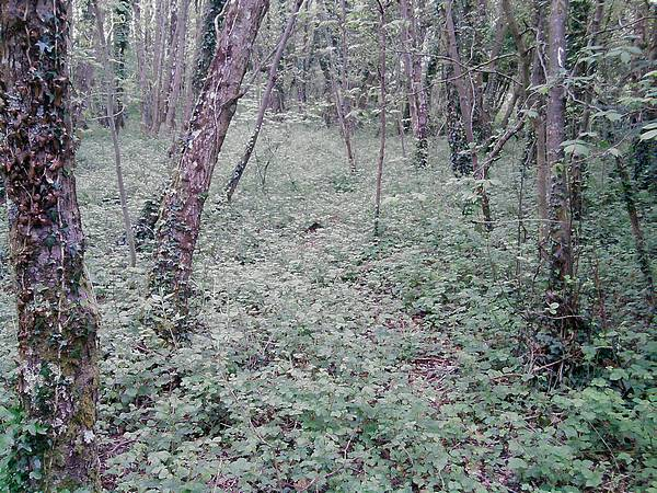 Woodland at Oxwich National Nature Reserve
