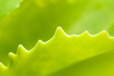 Leaf Detail found in back garden