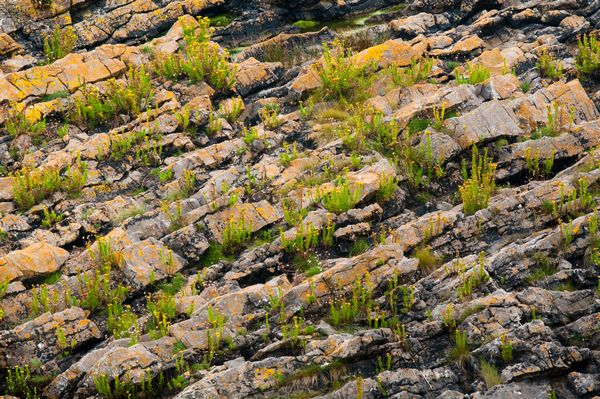 PLants and Rocks