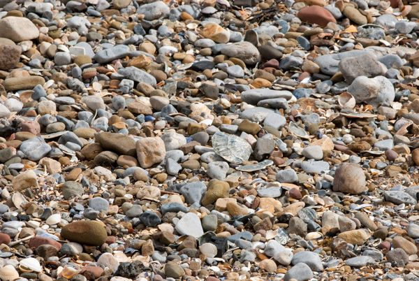 Pebbles and shells, Swansea Bay