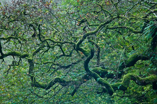 Branch patterns, Bishopston Valley, Gower
