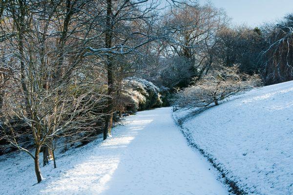 Clyne Gardens in the recent snowfall