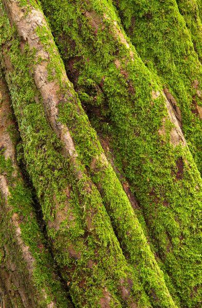 Tree detail, Gelli Hir Wood, Gower
