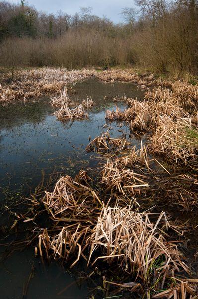 View of the pond in Gelli Hir Wood