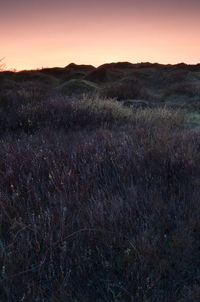 The last light catches the willow buds at Whiteford Burrows, Gower Peninsula