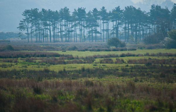 Whiteford Marsh, Gower Peninsula