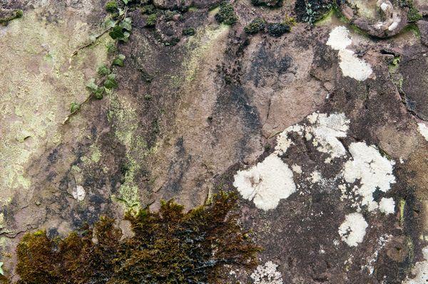 Lichen patterns on a gravestone