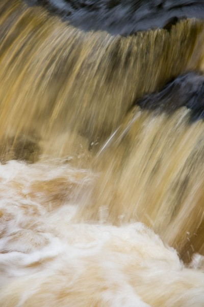 Elizabeth & Rowe Harding Nature Reserve20140406_DSC6503